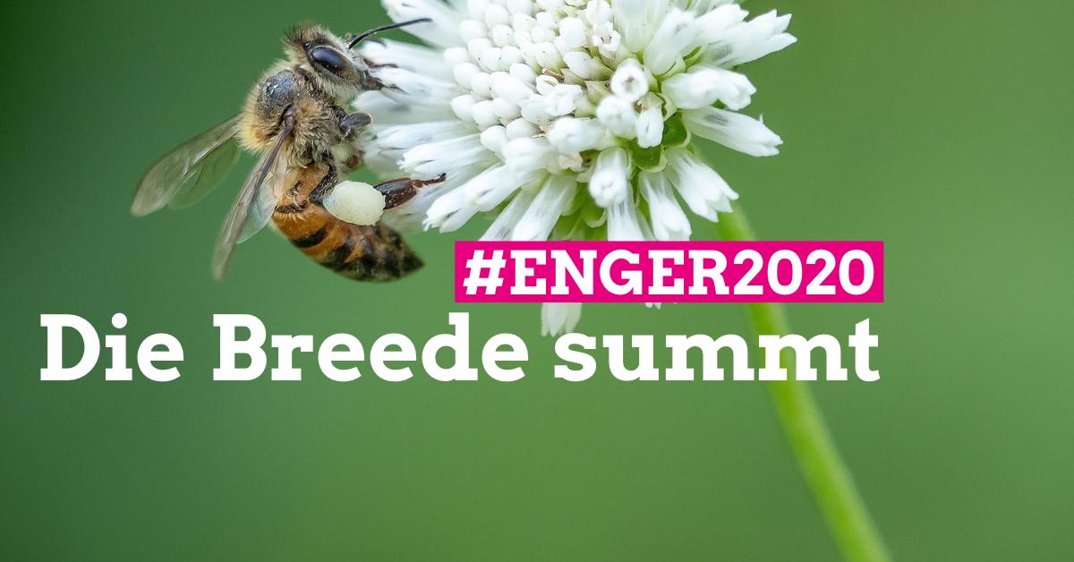 Die Breede summt | Insektenschutz und naturnahe Gärten